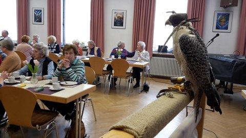 Falke im Pfarrsaal von St. Joseph beim Senioren Nachmittag